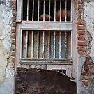 Ancestral Home Window, Balasinor, Gujurat, India by RIYAZ POCKETWALA