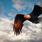 """Flying High"" - eagle by John Hartung"