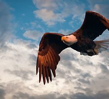 """""""Flying High"""" - eagle by ArtThatSmiles"""