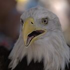 Angel- Bald Eagle #4 Iconic Native American Culture Lives On by WesternArt