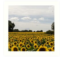 Field of Sunshine Art Print