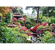 Coloured Garden Photographic Print