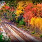 It's Been A Colorful Journey by Monica M. Scanlan
