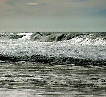 Kowabunga Dude, Surf's Up by Loree McComb