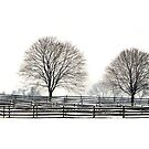 BUCKS COUNTY FENCES by MIKESANDY