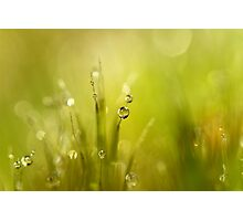 Sunshine Moss Photographic Print