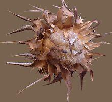 spiky by calcidiscus