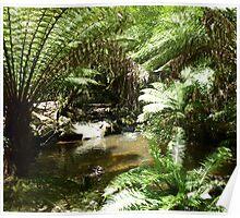 Lilydale Falls Creek - Lilydale, Tasmania Poster