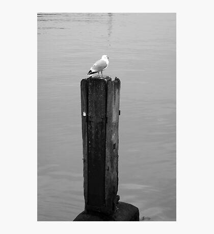 Harbour watch - Bridlington Photographic Print