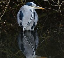 Heron and reflection by Richard Bowler