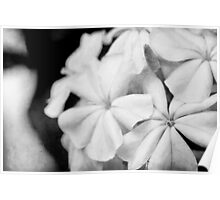 Flowers in black and white with texture Poster