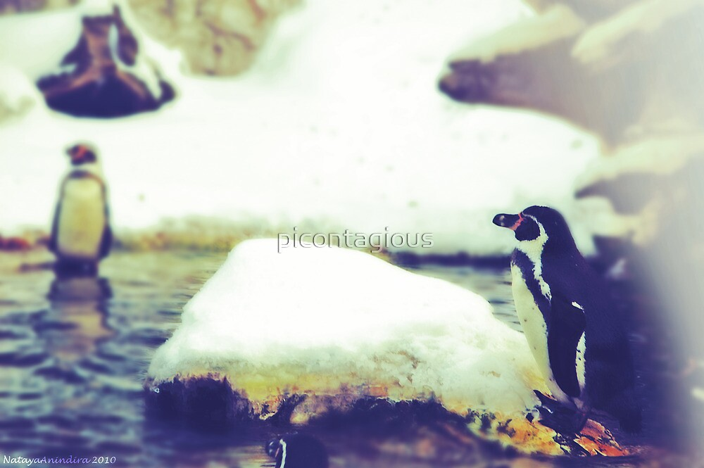 Pinguin Day 1 - Lonesome by picontagious