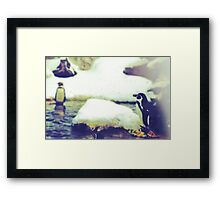 Pinguin Day 1 - Lonesome Framed Print