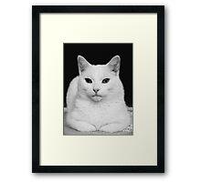 Feline Study Framed Print