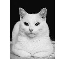 Feline Study Photographic Print