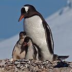 Gentoo Greetings from Antarctica by Krys Bailey