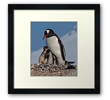 Gentoo Greetings from Antarctica Framed Print