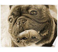 bulldog01sepia Poster