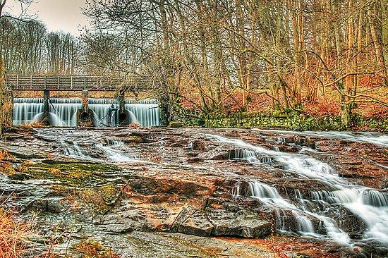 Forest Falls by Don Alexander Lumsden (Echo7)