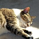 Peaceful Cat, Sleeping and Dreaming in the Sunlight by wrathko