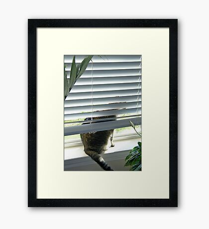 Curious Cat, Sneaking a Peek Framed Print