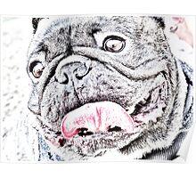 bulldog01sketch Poster