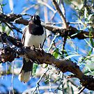 Butcherbird  by Margaret Stanton