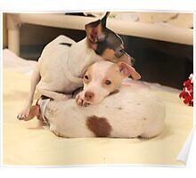 Puppy Bundle Poster
