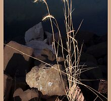 Seize the Sunlight by Inge Kraus