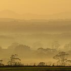 A Flowerdale Morning Mist by Paul Campbell Psychology