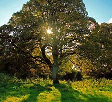 A Tree by Martina Fagan