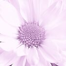 Pink Whisper by Sharon Woerner