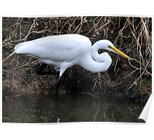 Great Egret Hunting Poster