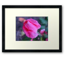 Double Bazooka Rose Framed Print