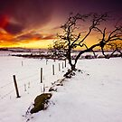 Fire In The Sky by Brian Kerr