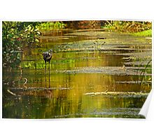 heron in the pond Poster