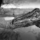 What's Black & White And Sticky... by rorycobbe