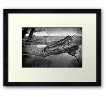 What's Black & White And Sticky... Framed Print