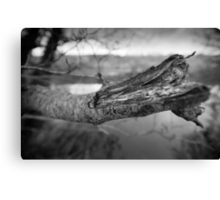 What's Black & White And Sticky... Canvas Print