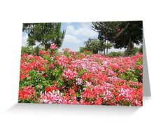 Summer Flowers in Jerusalem Greeting Card