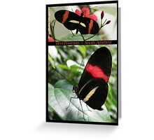 Butterfly (South America) ~ Red Postman Greeting Card