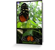 Butterfly (South America) ~ Golden Longwing Greeting Card
