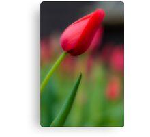 Flower in Love  Canvas Print