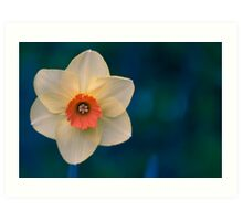 Morning Daffodil  Art Print