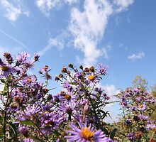Pink flowers against a blue sky  by Canonlove1130