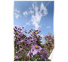 Pink flowers against a blue sky  Poster