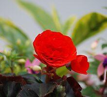 Vermilion floral utopia  by justbmac