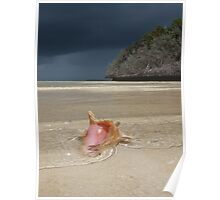 Bahama Conch Poster