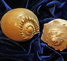 Shell Duo by Lynda Lehmann