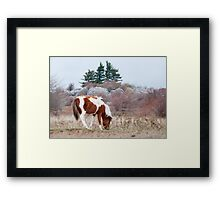 Desolate Land Framed Print